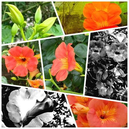 02.7月 オレンジの花.jpg